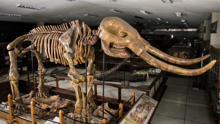 Los fósiles testifican la evolución de la Tierra