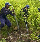 Elena Espinosa alerta de los problemas de seguridad alimentaria derivados del cultivo de droga en América Latina